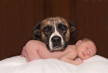 Celos | La mascota cela a mi bebé ¿Qué debo hacer?