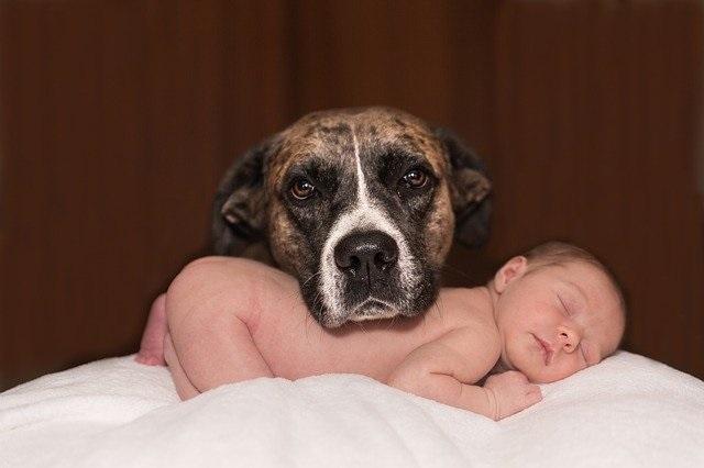 Celos - Las mascotas - Mamás360