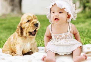 Preparar a la mascota para la llegada del bebé